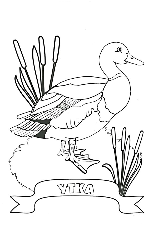 Раскраски перелетные птицы для детей - 2