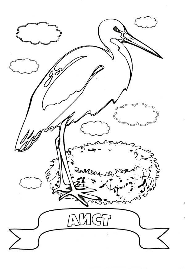 Раскраски перелетные птицы для детей - 10