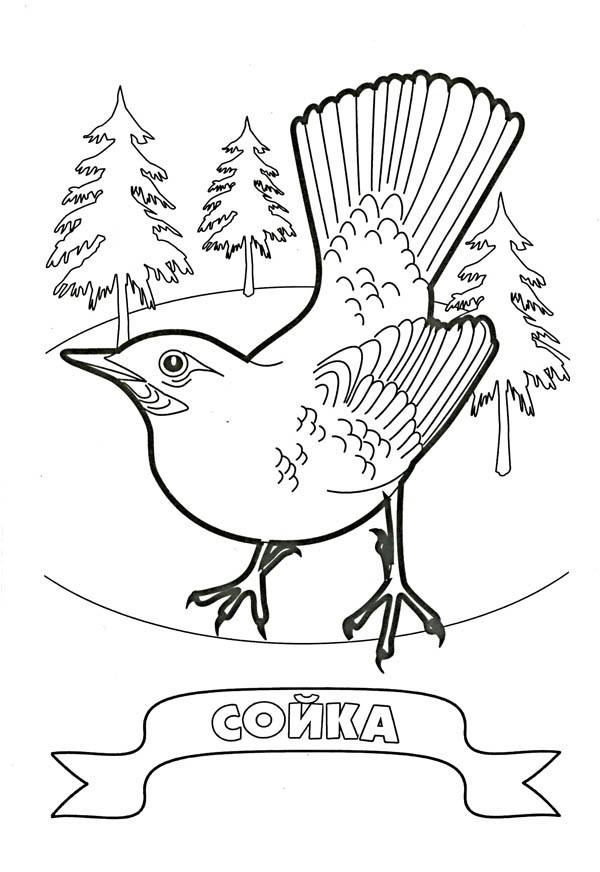 Птиц скачать и напечатать раскраску