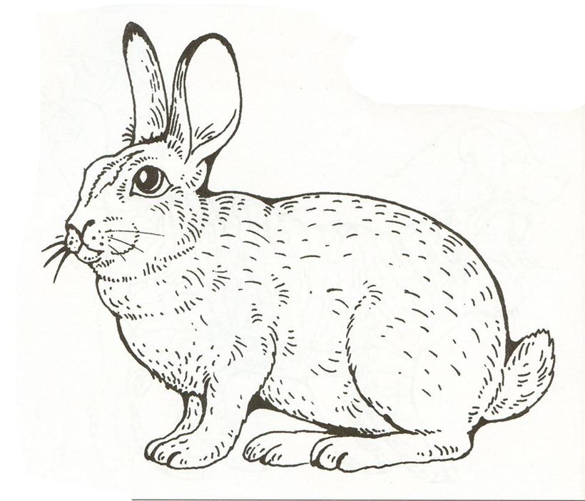 Раскраски животные на детском сайте