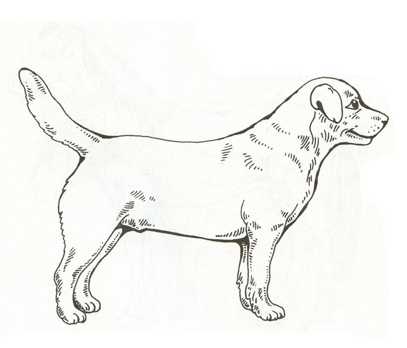 Распечатать раскраски домашних животных