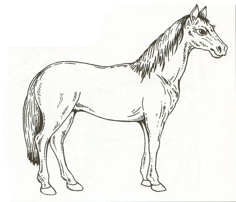 Лошадь раскраски домашних животных