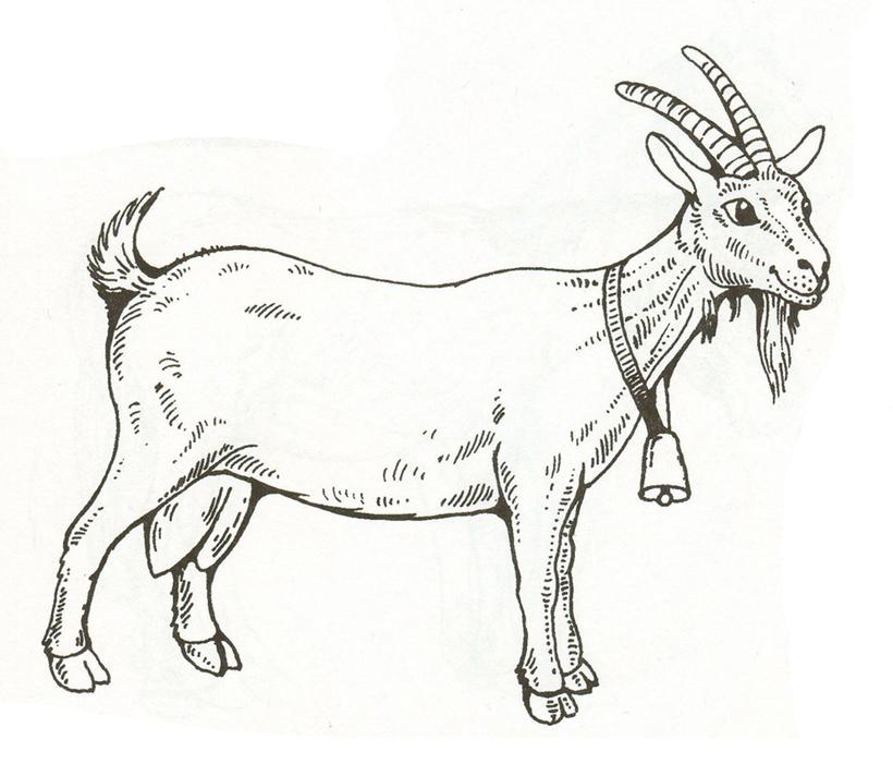 Коза раскраски домашних животных